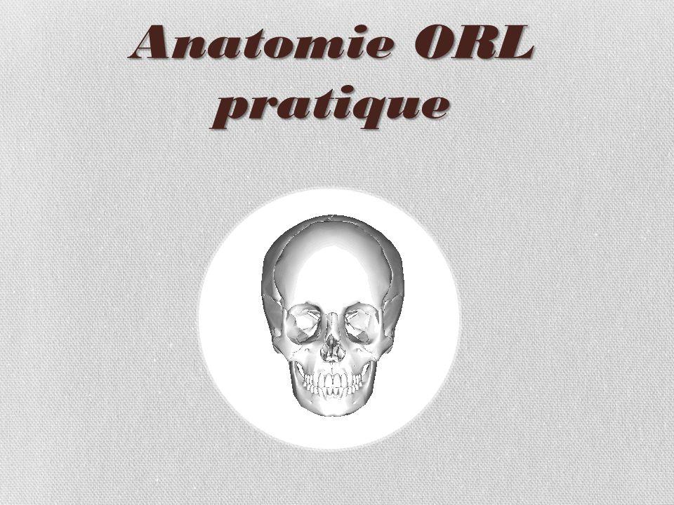 Anatomie ORL pratique .PDF