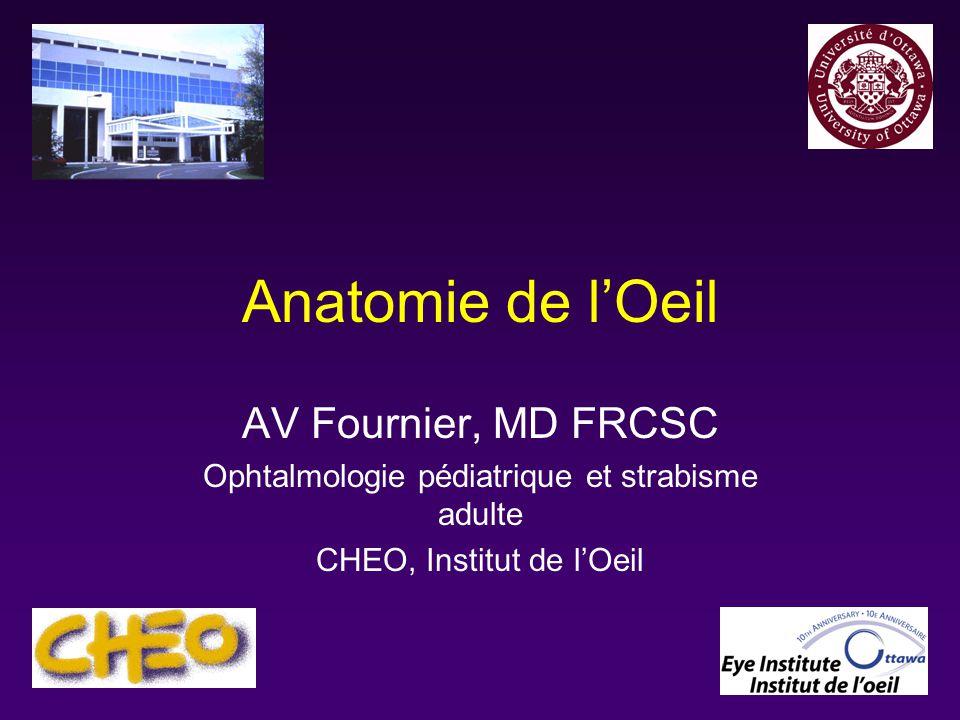 Anatomie de l'Œil .PDF