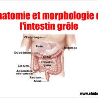 Anatomie et morphologie de l'intestin grêle .pdf