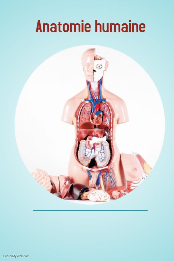 Anatomie humaine .PDF