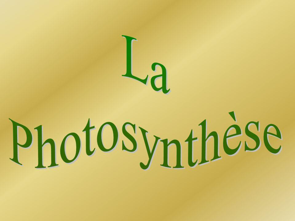 La Photosynthèse .PDF