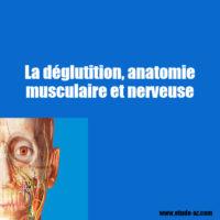 La déglutition, anatomie musculaire et nerveuse .pdf