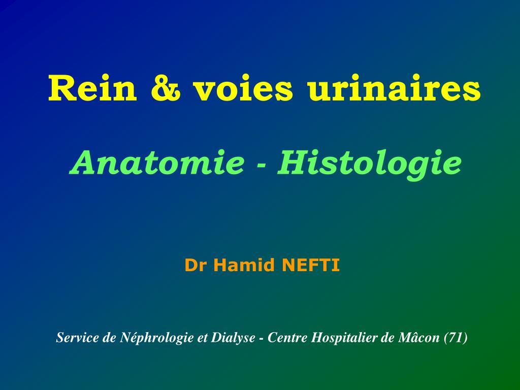 Rein et voies urinaires .PDF