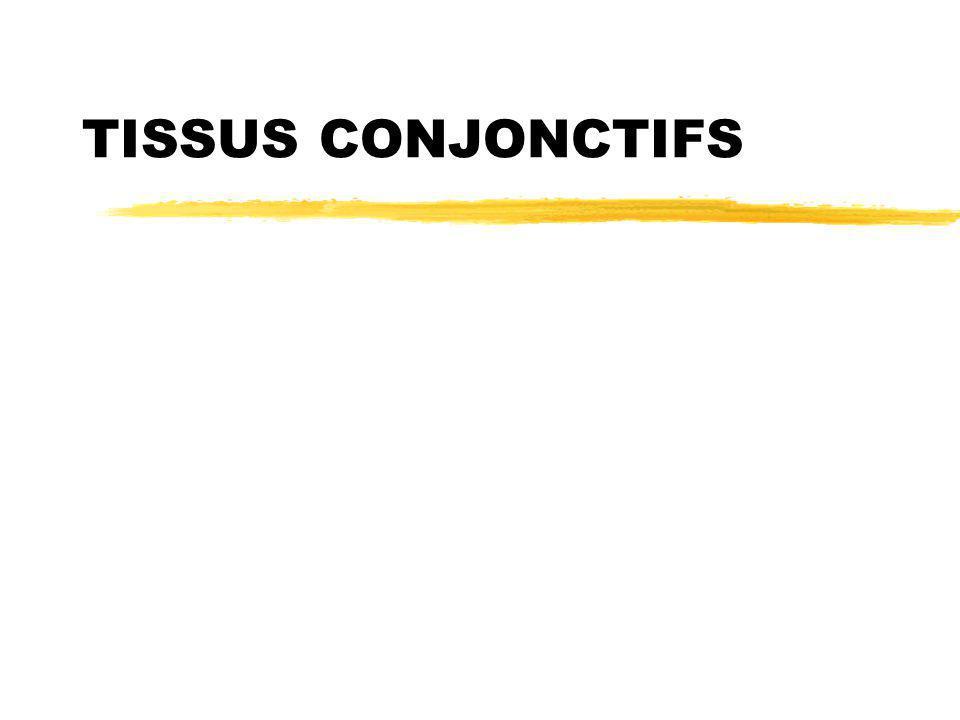 TISSUS CONJONCTIFS .PDF