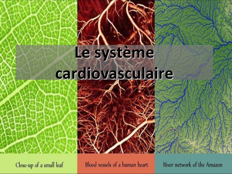 Le système cardiovasculaire .PDF