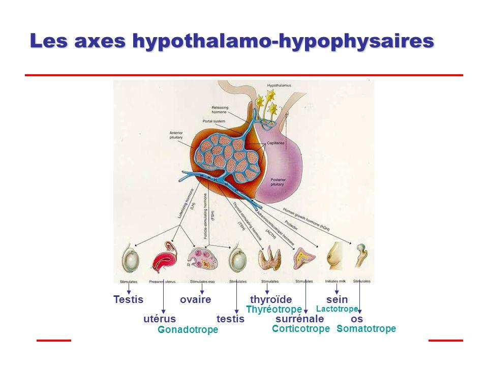 Les axes hypothalamo-hypophysaires .PDF