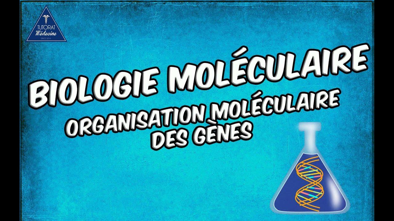 Organisation moléculaire des gènes Partie 1