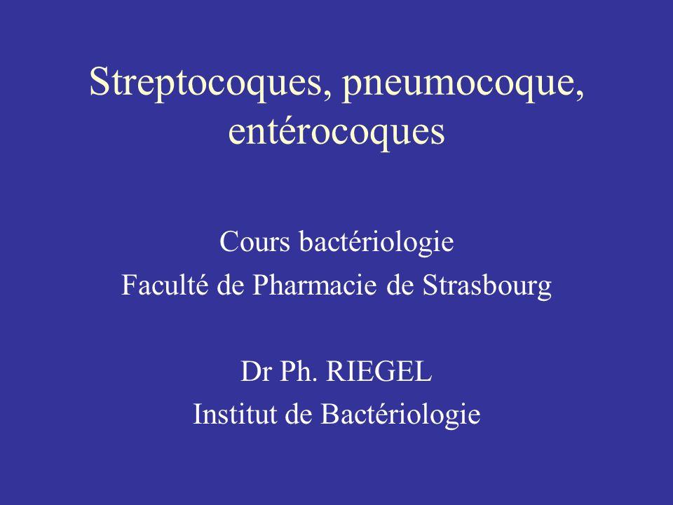 Streptocoques, pneumocoque, entérocoques .PDF