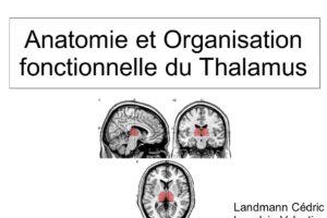 Anatomie et Organisation fonctionnelle du Thalamus .PDF