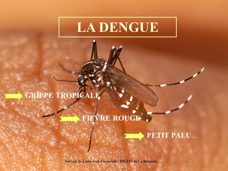 LA DENGUE .PDF