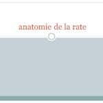 Anatomie de la rate .PDF