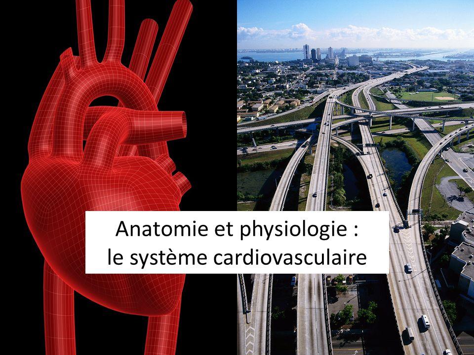 Anatomie et physiologie : le système cardiovasculaire .PDF