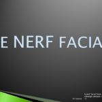 Cours : nerf facial