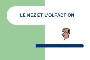 LE NEZ ET L'OLFACTION .PDF