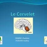 Le Cervelet .PDF