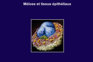 Méïose et tissus épithéliaux .PDF