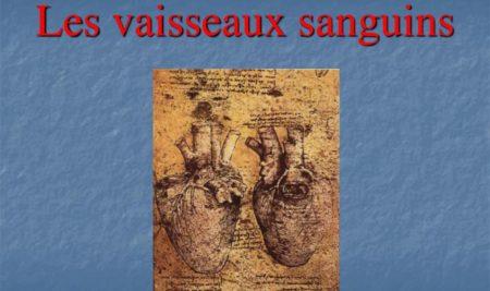 Les vaisseaux sanguins .PDF