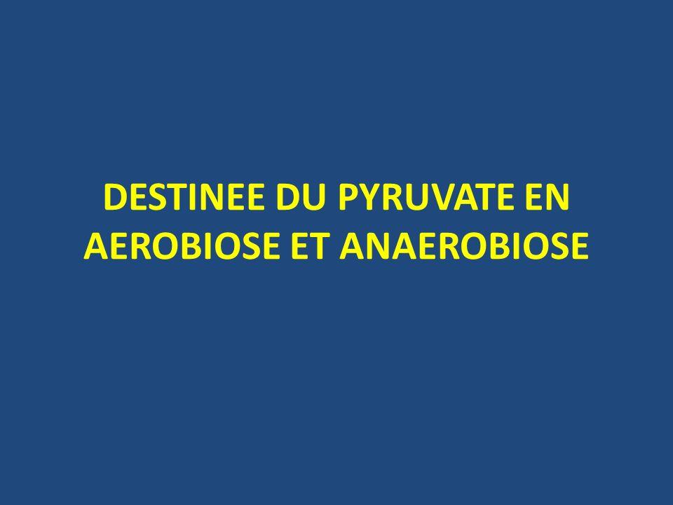 DESTINEE DU PYRUVATE EN AEROBIOSE ET ANAEROBIOSE .PDF