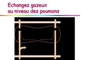 Echanges gazeux au niveau des poumons .PDF