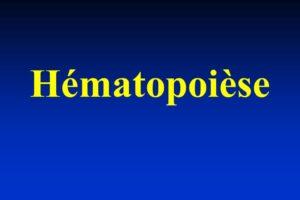 Hématopoièse .PDF