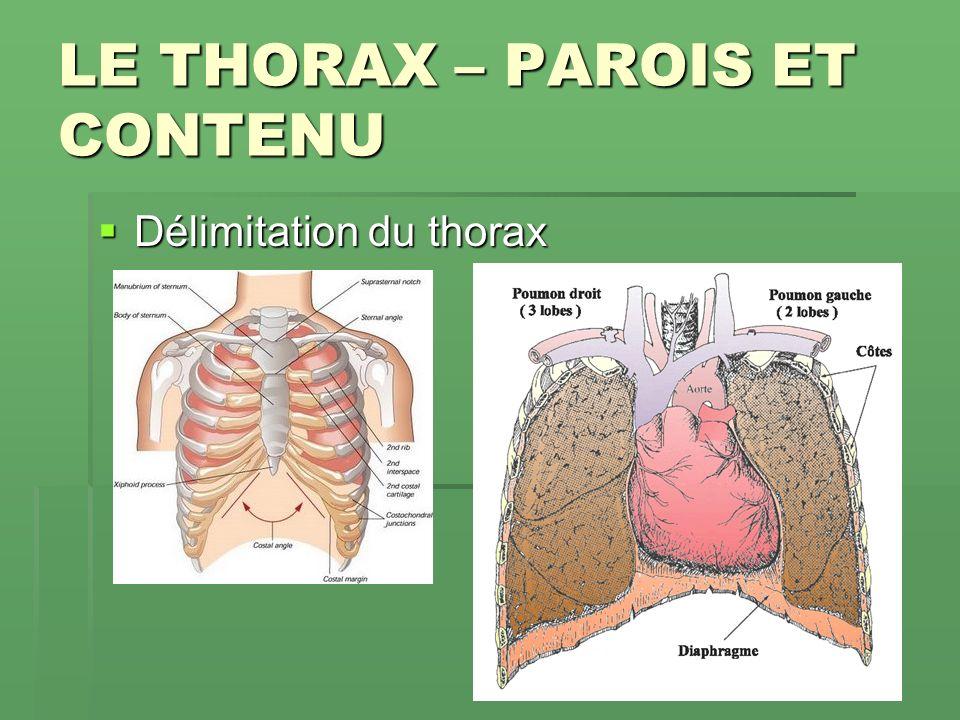LE THORAX – PAROIS ET CONTENU .PDF