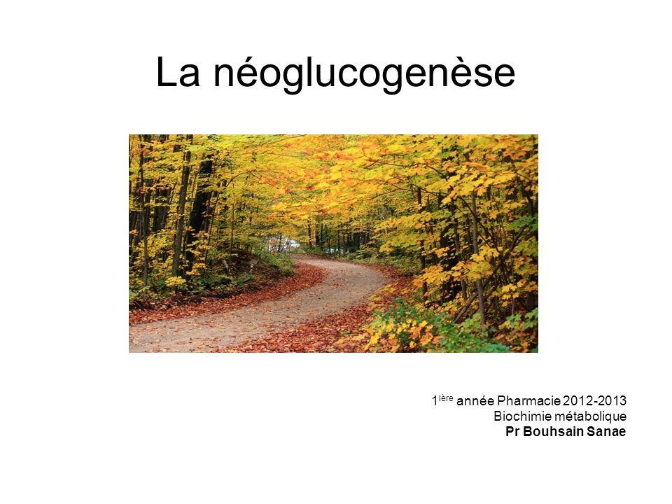 La néoglucogenèse .PDF