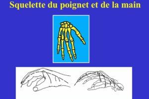 Squelette du poignet et de la main .PDF