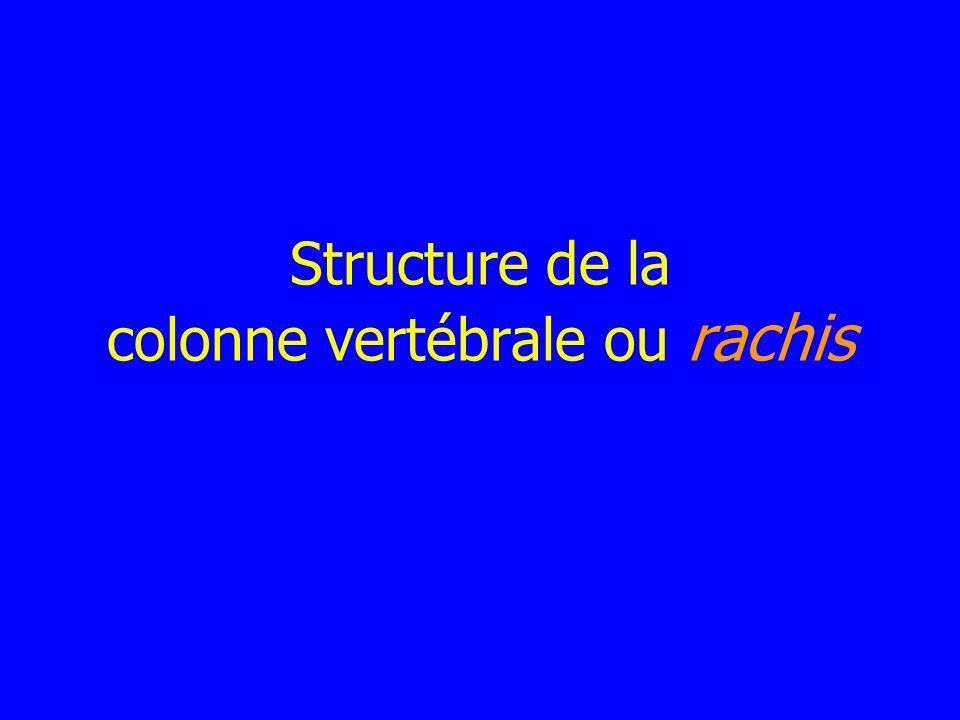 Structure de la colonne vertébrale ou rachis .PDF
