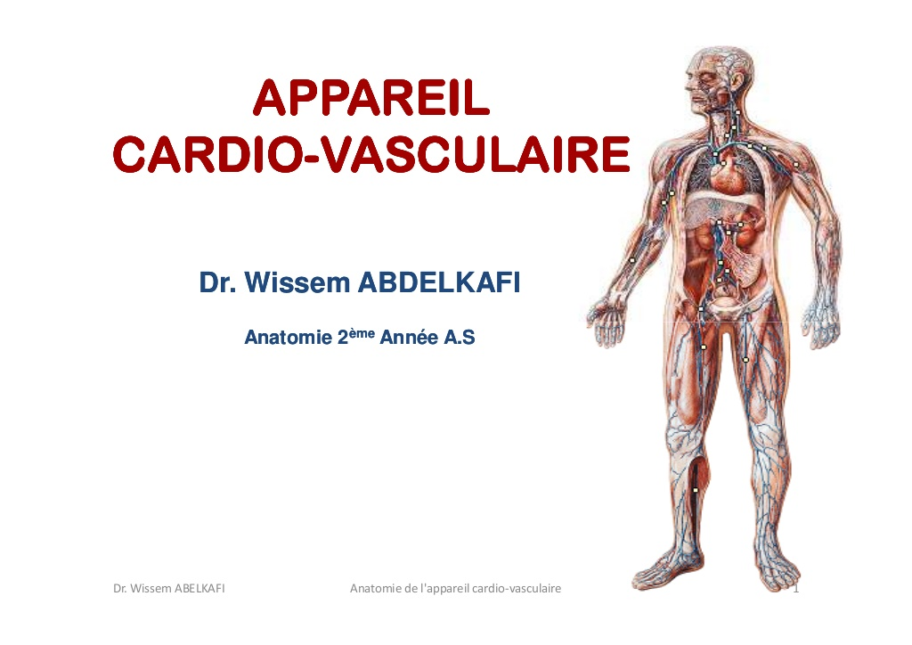 Anatomie cardio-circulatoire .PDF