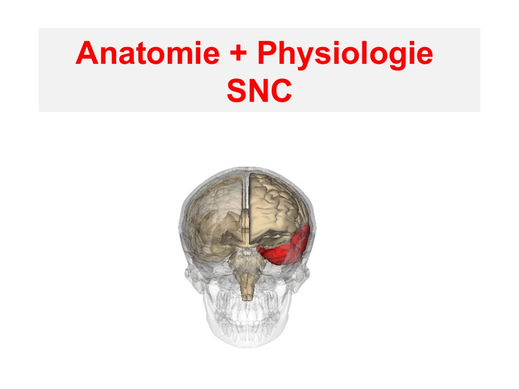 Anatomie et physiologie système nerveux central .PDF