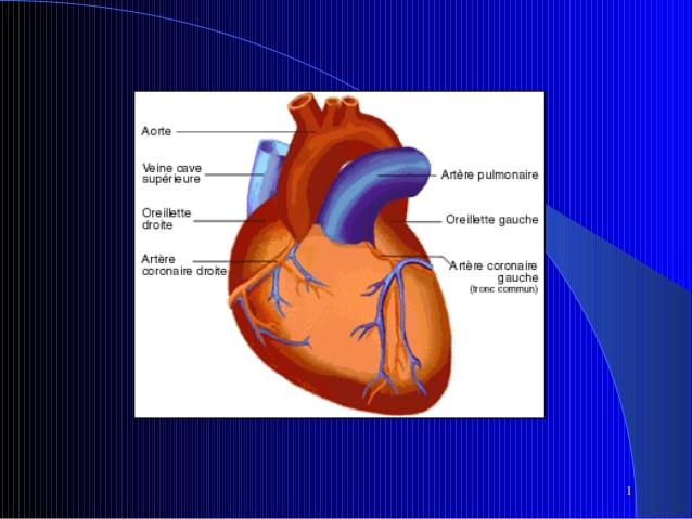 Electrophysiologie .PDF