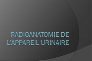 Radioanatomie de l'appareil urinaire .PDF