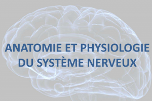 ANATOMIE-PHYSIOLOGIE DU SYSTEME NERVEUX