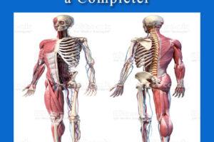 schéma corps humain à compléter . pdf